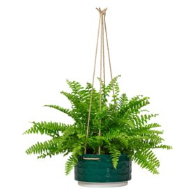 Large Ceramic Hanging Pot, 60s Stem, Evergreen